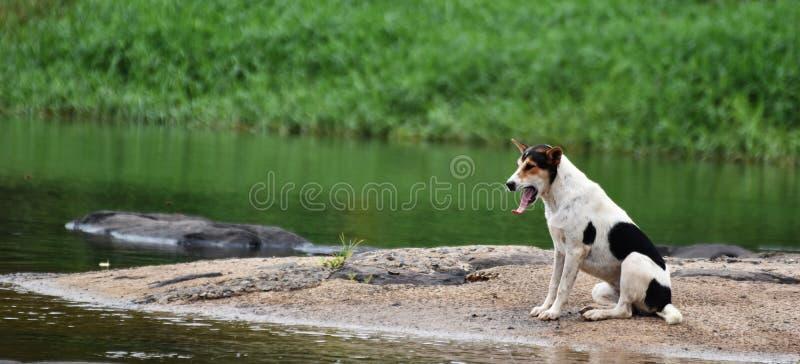 Τρυπημένος περιμένοντας ιδιοκτήτης σκυλιών στοκ εικόνα με δικαίωμα ελεύθερης χρήσης