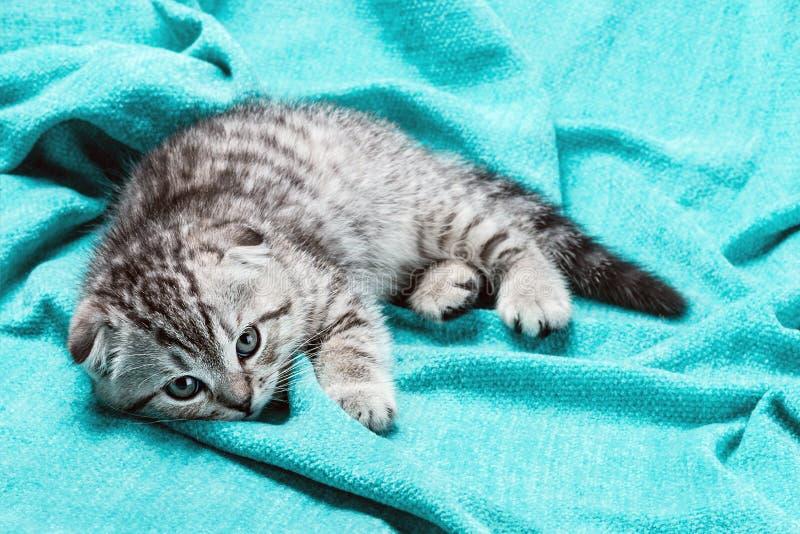 τρυπημένο γατάκι στοκ φωτογραφίες με δικαίωμα ελεύθερης χρήσης