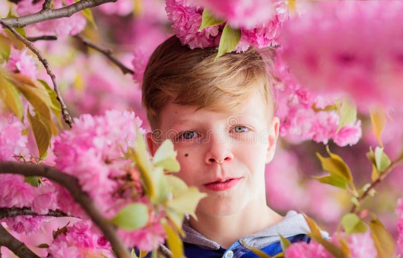 Τρυφερή άνθιση Το χαριτωμένο παιδί απολαμβάνει τη θερμή ημέρα άνοιξη Κήπος sakura επίσκεψης Τοποθέτηση εφήβων αγοριών κοντά στο s στοκ φωτογραφίες με δικαίωμα ελεύθερης χρήσης