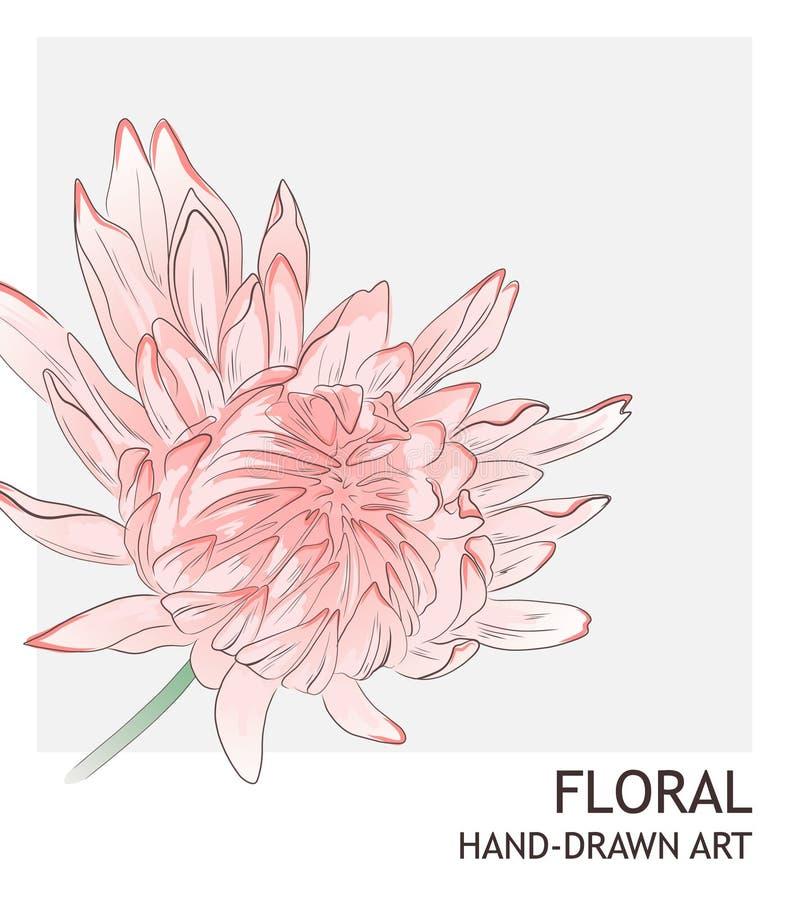 Τρυφερή τροπική hibiscus διακόσμηση αντίθεσης ανθοδεσμών λουλουδιών στο γκρίζο υπόβαθρο Απεικόνιση φυλλώματος ζουγκλών o απεικόνιση αποθεμάτων