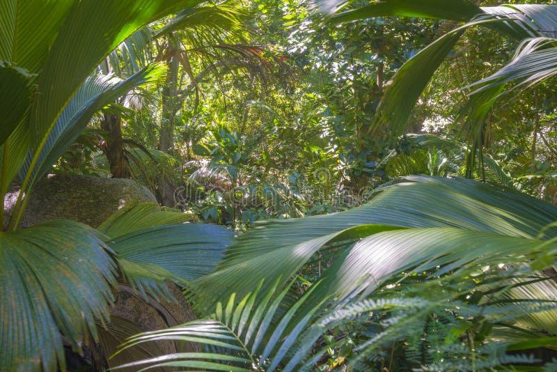 Τρυφερή φυσική επιφύλαξη του Ferdinand, Σεϋχέλλες στοκ φωτογραφίες