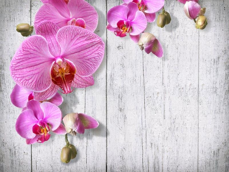 Τρυφεροί λουλούδια και οφθαλμοί ορχιδεών στο παλαιό άσπρο χρωματισμένο vinta πινάκων στοκ εικόνες με δικαίωμα ελεύθερης χρήσης