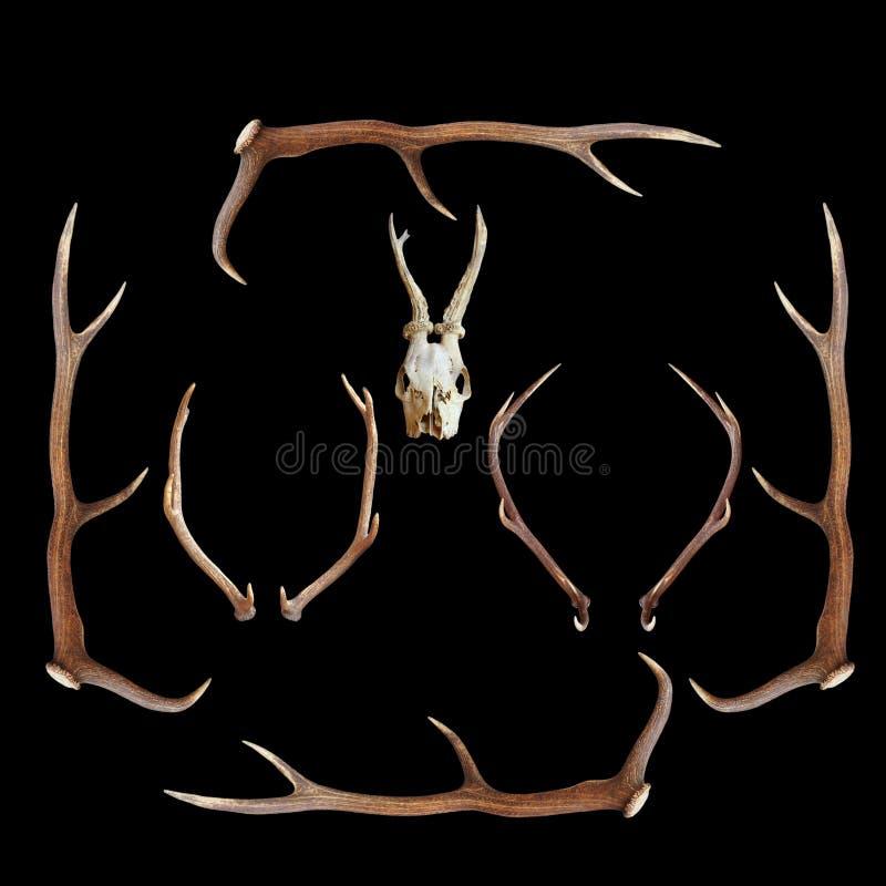Τρόπαια κυνηγιού ελαφιών στο σκοτεινό υπόβαθρο στοκ εικόνα με δικαίωμα ελεύθερης χρήσης