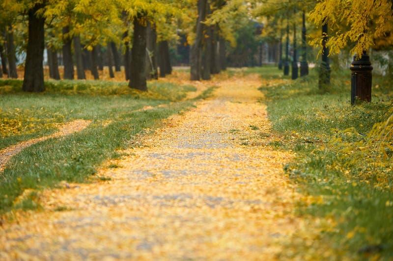 Τρόπος με τα δέντρα φθινοπώρου στο πάρκο, την πράσινη χλόη και τα κίτρινα φύλλα στοκ εικόνες