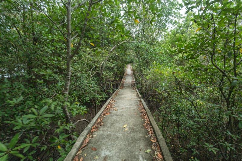 Τρόπος να πάει στην εκβολή μέσω του δάσους μαγγροβίων, Krabi Ταϊλάνδη στοκ φωτογραφίες