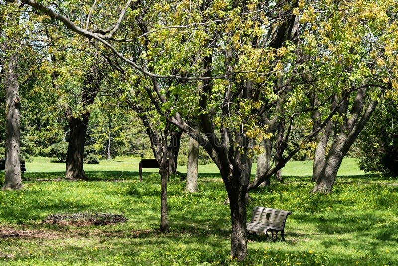 τρόπος πάρκων πόλεων φωτεινό ανθίζοντας πράσινο δέντρο άνοιξη φύσης κλάδων Όμορφο τοπίο πράσινα δέντρα πάρκων χλόης στοκ εικόνες