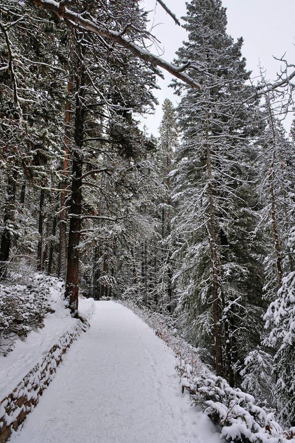 Τρόπος στο δάσος - εθνικό πάρκο Yoho στοκ φωτογραφίες