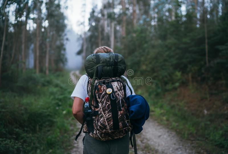 Τρόπος του θηλυκού προσκυνητών Αγίου James backpacker που περνά από την πορεία από το δασικό πίσω βλαστό εικόνας άποψης ευκαλύπτω στοκ φωτογραφίες με δικαίωμα ελεύθερης χρήσης