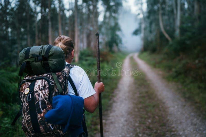 Τρόπος του θηλυκού προσκυνητών Αγίου James backpacker που περνά από την πορεία από το δασικό πίσω βλαστό εικόνας άποψης ευκαλύπτω στοκ εικόνες