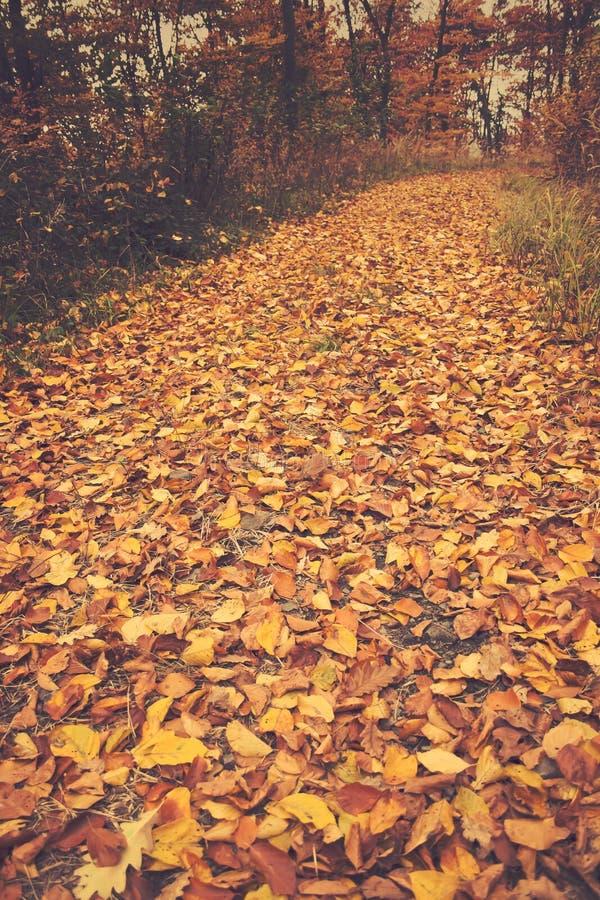 Τρόπος φθινοπώρου στοκ εικόνα