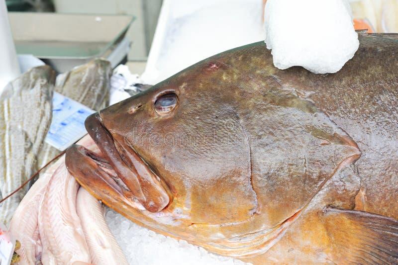 τρόφιμα ακατέργαστα Ψάρια στοκ φωτογραφία με δικαίωμα ελεύθερης χρήσης