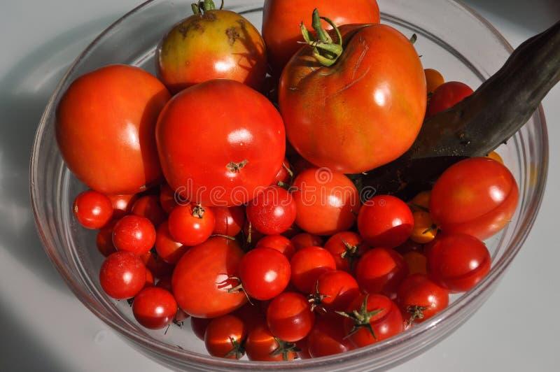 τρόφιμα λαχανικών ντοματών στοκ φωτογραφία με δικαίωμα ελεύθερης χρήσης