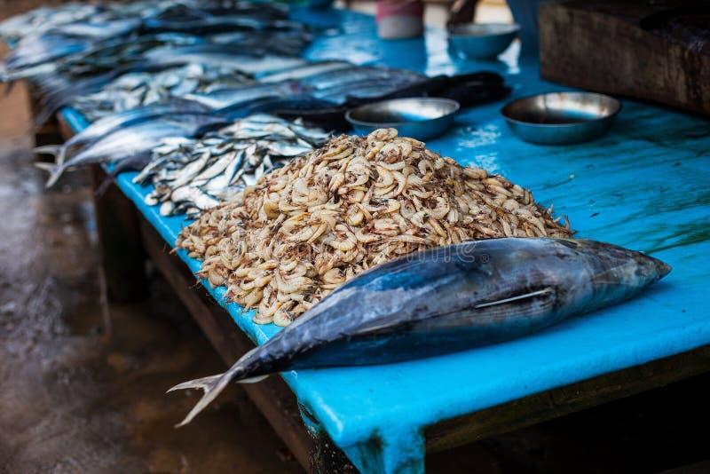 Θαλασσινά στην αγορά ψαριών τρόφιμα οδών, να δειπνήσει αγορές, θαλασσινά στη Σρι Λάνκα Τόνος και γαρίδες στοκ εικόνα με δικαίωμα ελεύθερης χρήσης