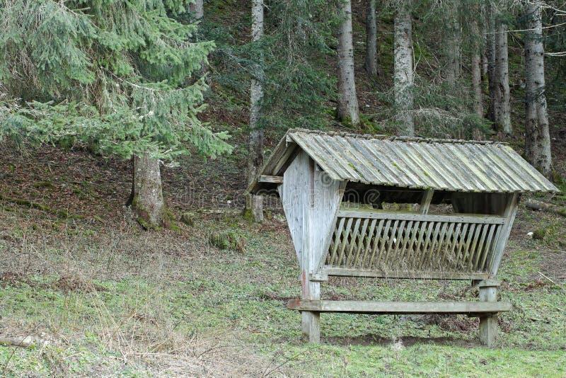 Τρόφιμα που προετοιμάζονται σε μια φάτνη για τα deers κατά τη διάρκεια του χειμώνα στο δάσος στοκ εικόνα με δικαίωμα ελεύθερης χρήσης