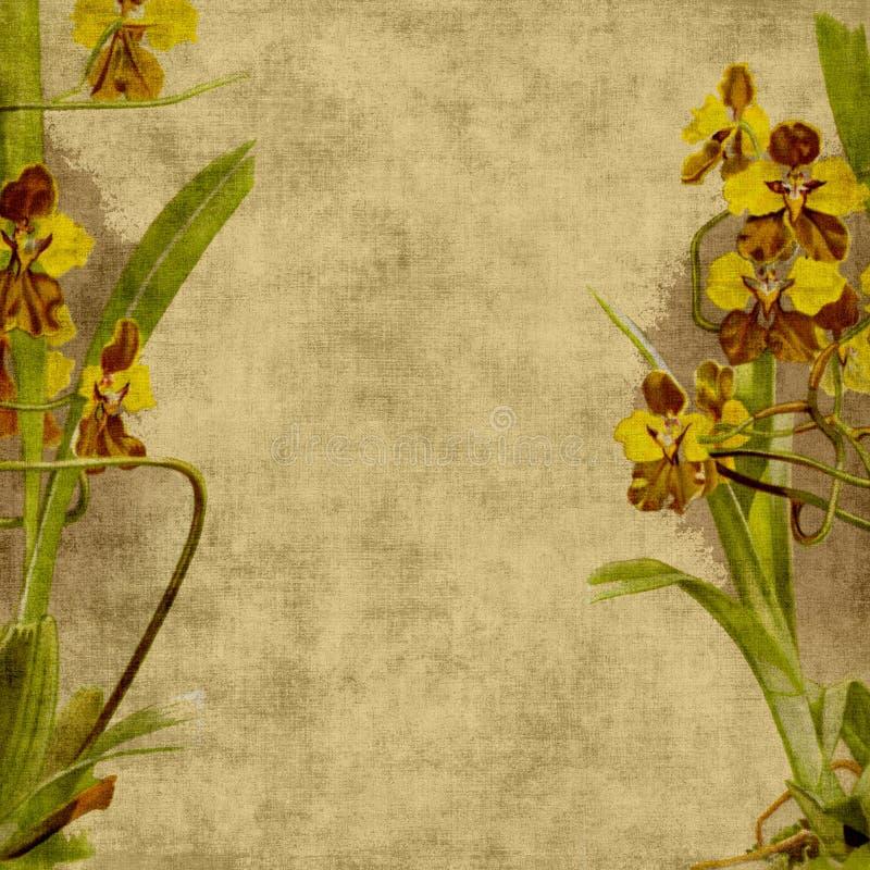 τρύγος λευκώματος αποκομμάτων λουλουδιών ανασκόπησης ελεύθερη απεικόνιση δικαιώματος