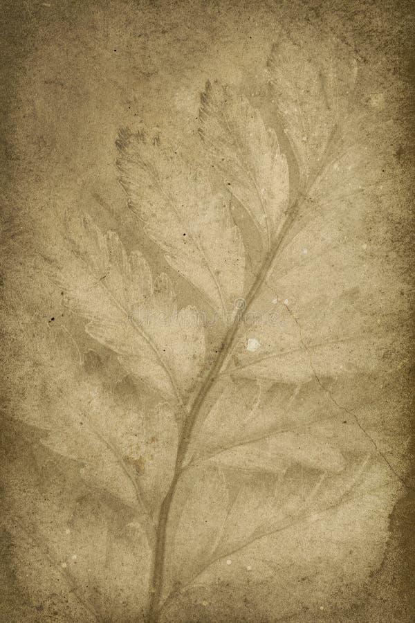 τρύγος σφραγίδων κλάδων ανασκόπησης στοκ φωτογραφία με δικαίωμα ελεύθερης χρήσης