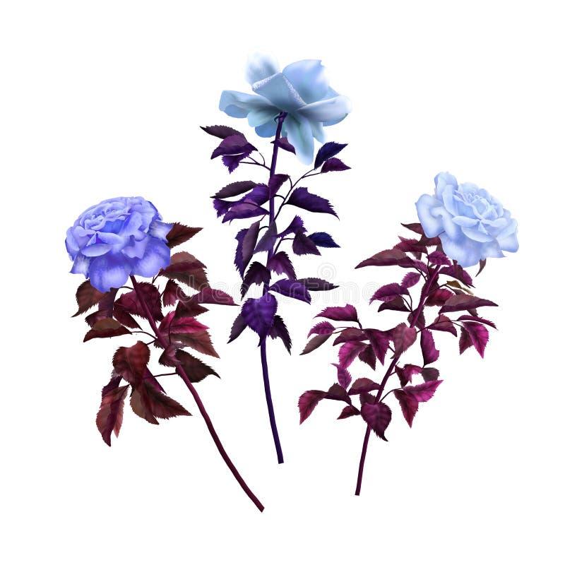 Τρύγος τριών διαφορετικός τριαντάφυλλων στοκ εικόνες