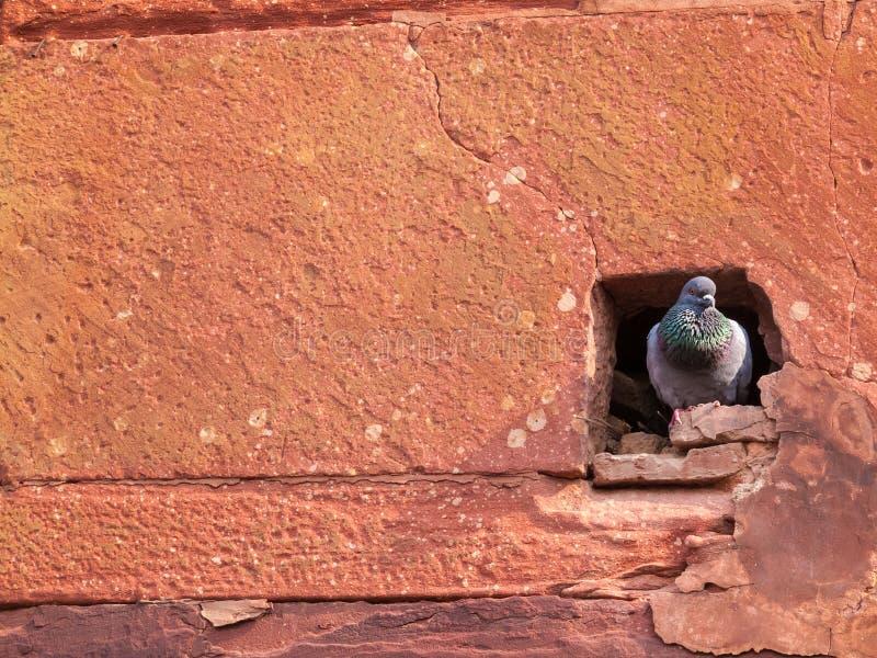 Τρύπα περιστεριών στο οχυρό Agra στοκ φωτογραφίες
