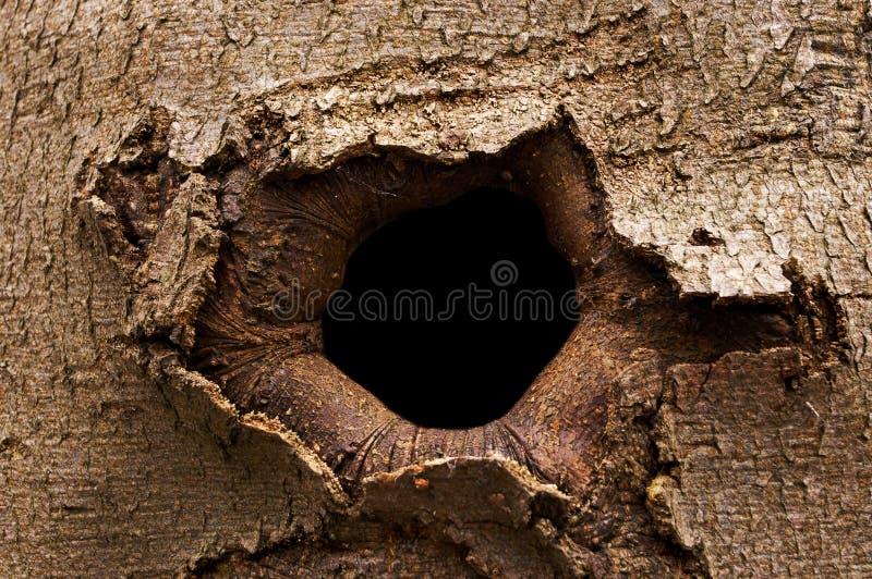 τρύπα φλοιών στοκ εικόνα με δικαίωμα ελεύθερης χρήσης