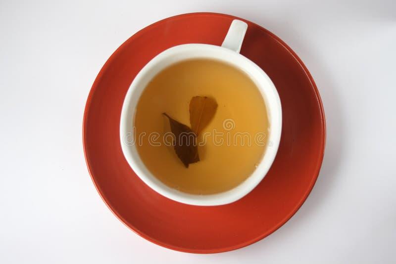 τσάι δύο φύλλων φλυτζανιών στοκ εικόνα