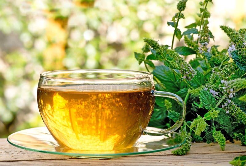 Τσάι με peppermint στοκ φωτογραφία με δικαίωμα ελεύθερης χρήσης