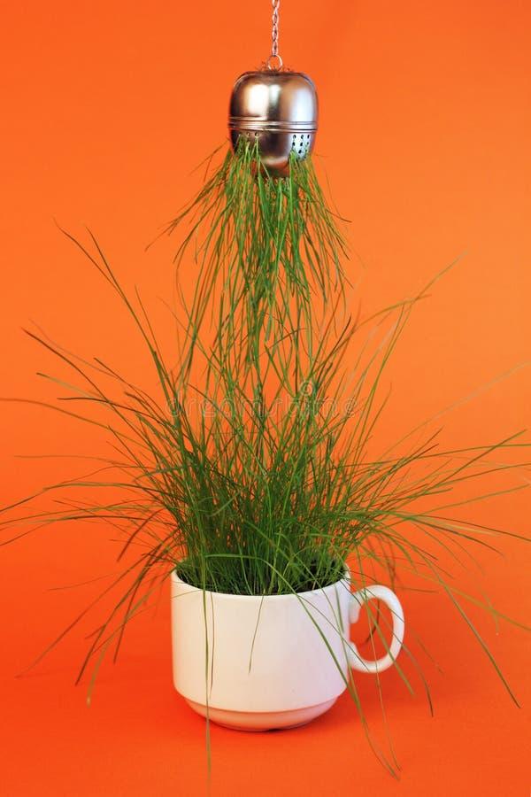 Τσάι που δημιουργείται από τη φύση στοκ φωτογραφία με δικαίωμα ελεύθερης χρήσης