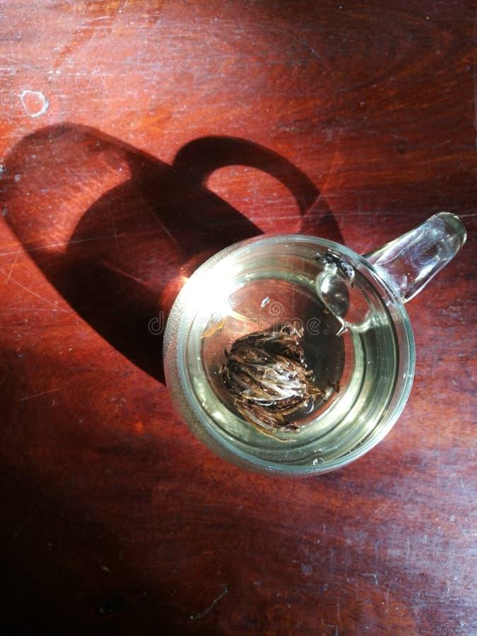 Τσάι στο φως στοκ φωτογραφία