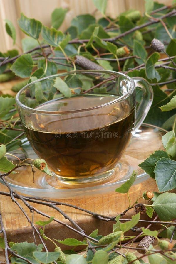 τσάι φύλλων σημύδων στοκ φωτογραφία με δικαίωμα ελεύθερης χρήσης