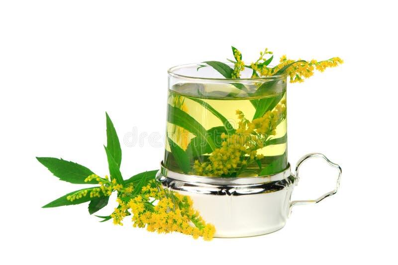 τσάι χρυσοβεργών στοκ φωτογραφία με δικαίωμα ελεύθερης χρήσης