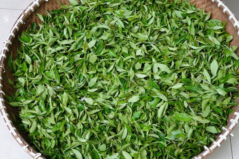 Τσάι Longjing Xihu, ή τσάι δράκων καλά στοκ φωτογραφία με δικαίωμα ελεύθερης χρήσης