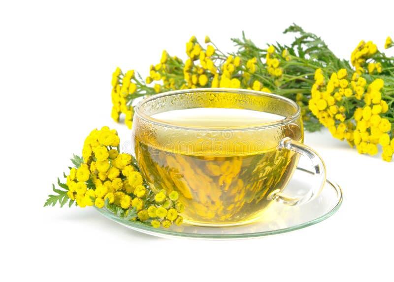 Τσάι tansy στοκ φωτογραφία