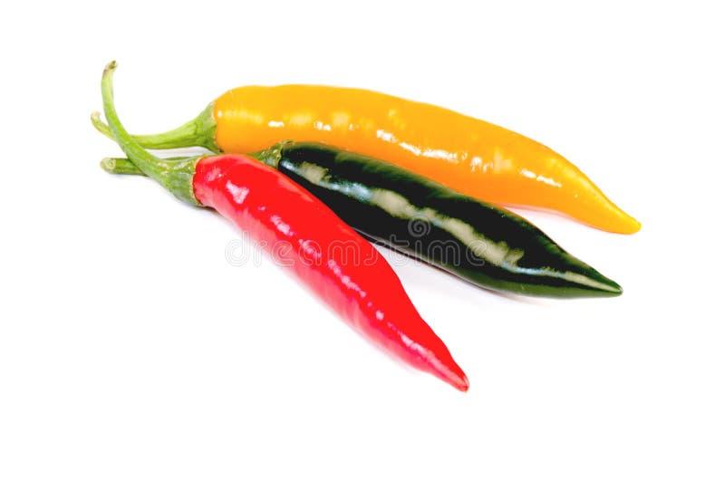 Τσίλι (καψικό frutescens Λ.) στοκ εικόνες