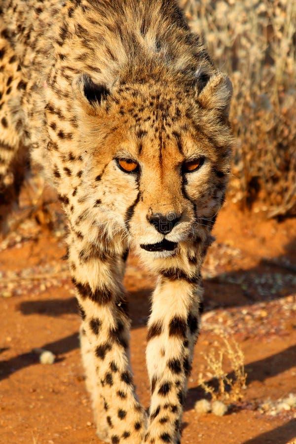Τσίτα - Ναμίμπια Αφρική στοκ εικόνες με δικαίωμα ελεύθερης χρήσης