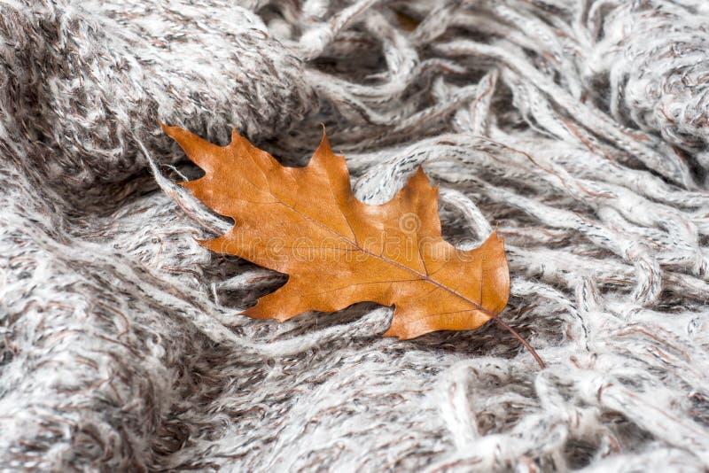 Τσαλακωμένο γκρίζο πλεκτό κάλυμμα με το δρύινο φύλλο φθινοπώρου Το μαλακό και θερμό ύφασμα είναι τσαλακωμένο στις πτυχές Σύσταση  στοκ εικόνα