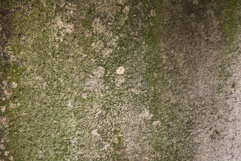 τσιμέντο ανασκόπησης mossy στοκ εικόνα με δικαίωμα ελεύθερης χρήσης