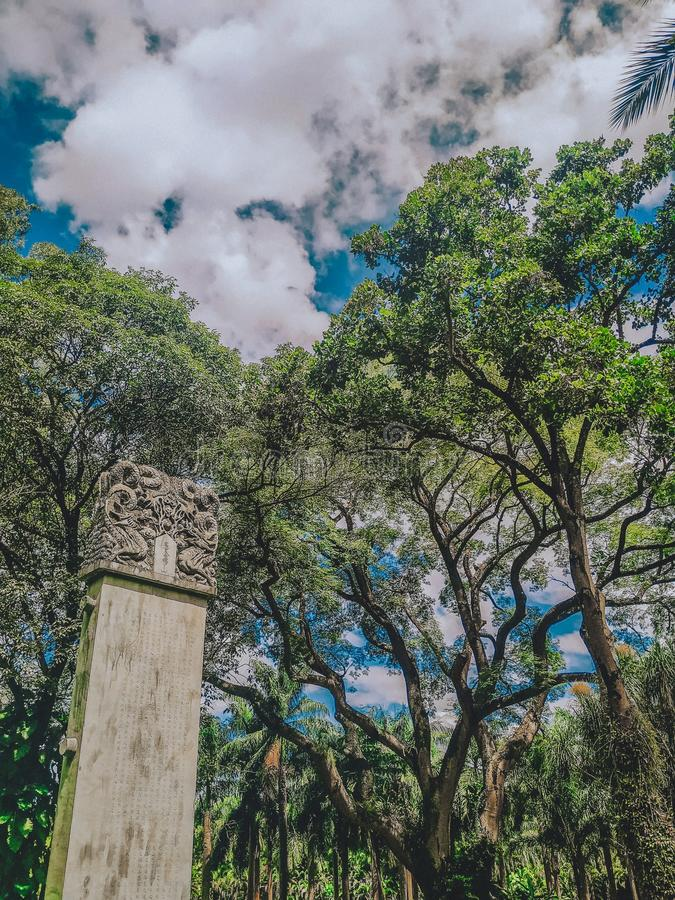 Τσιμέντο στο natura στοκ εικόνες