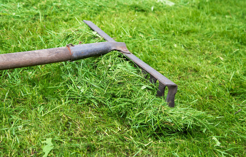 Τσουγκράνα που βρίσκεται στη χλόη στον κήπο στοκ εικόνα με δικαίωμα ελεύθερης χρήσης