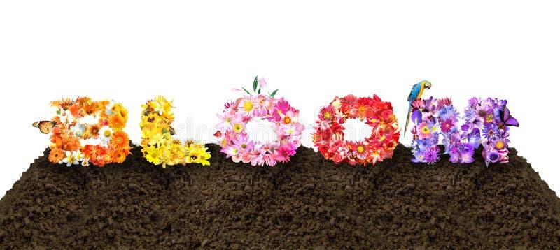 Τυπογραφία λουλουδιών άνθισης ελεύθερη απεικόνιση δικαιώματος