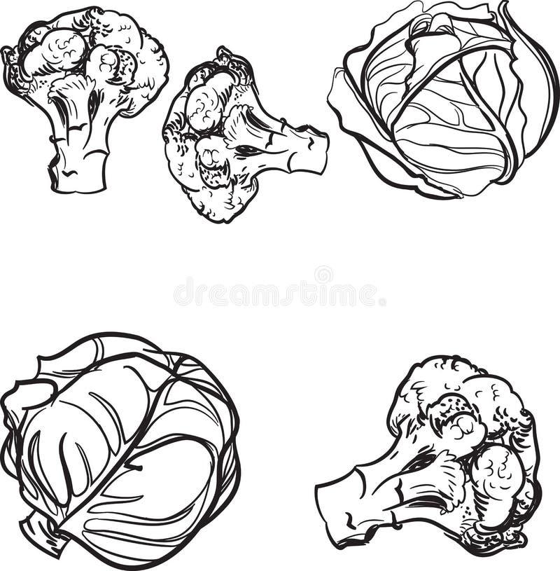 Τυποποιημένο λάχανο σε ένα άσπρο υπόβαθρο επίσης corel σύρετε το διάνυσμα απεικόνισης στοκ εικόνα με δικαίωμα ελεύθερης χρήσης