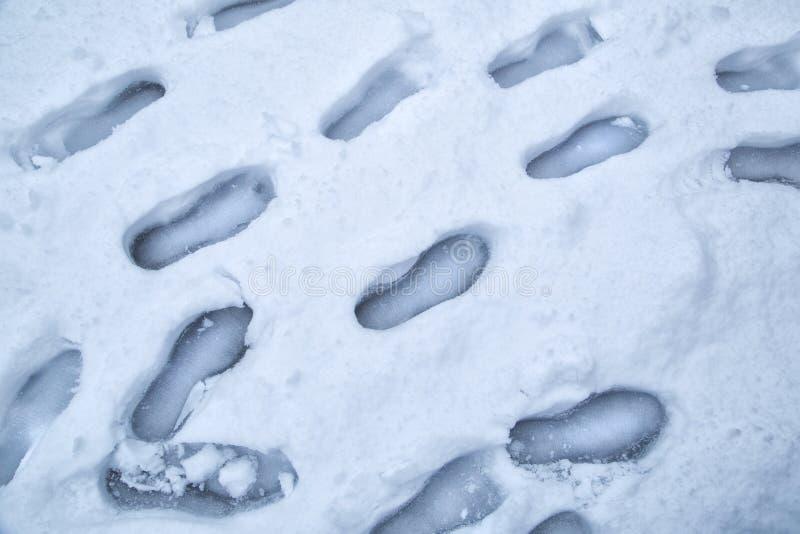 Τυπωμένες ύλες παπουτσιών στο χιόνι στοκ εικόνες