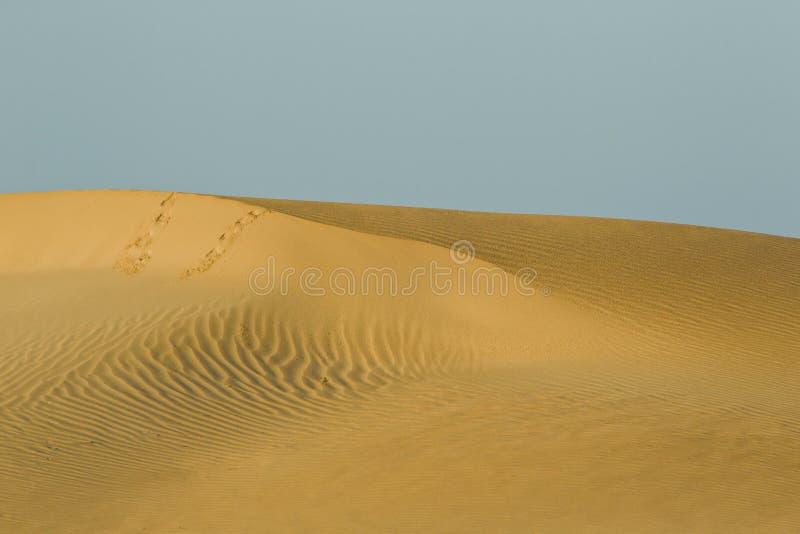 τυπωμένες ύλες ποδιών αμμό&la στοκ εικόνες