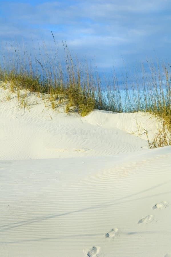 τυπωμένες ύλες ποδιών αμμό&la στοκ φωτογραφία