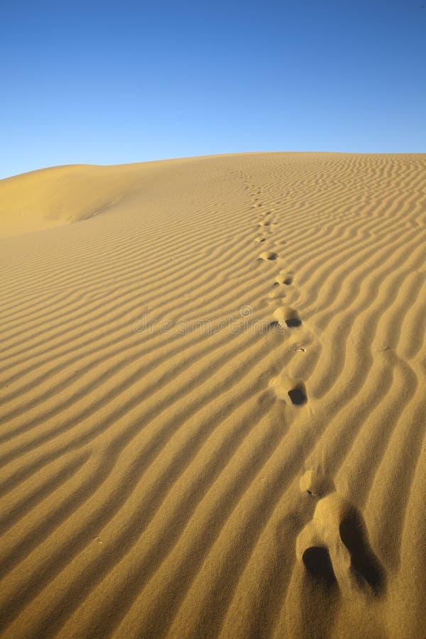 Τυπωμένες ύλες ποδιών στους αμμόλοφους άμμου. στοκ φωτογραφίες