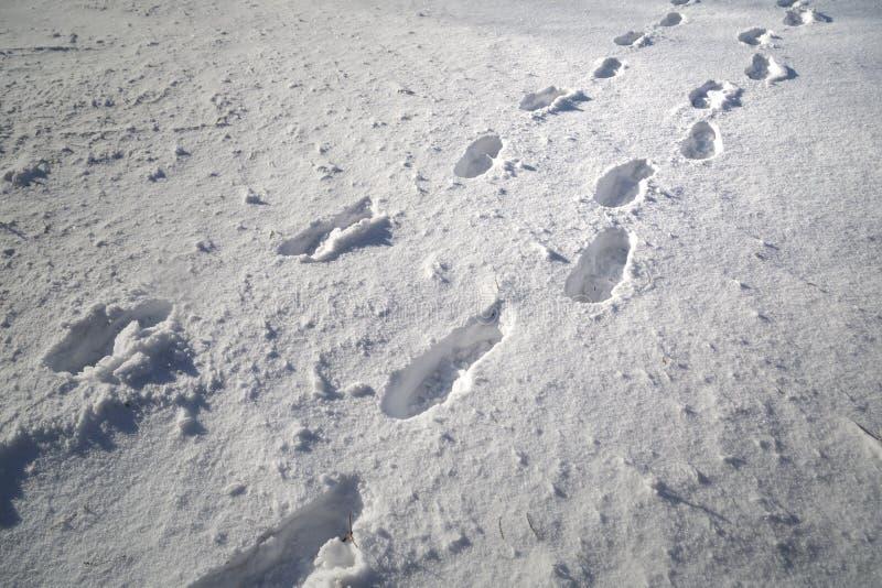 Τυπωμένες ύλες παπουτσιών στο φρέσκο βαθύ χιόνι στοκ εικόνα με δικαίωμα ελεύθερης χρήσης