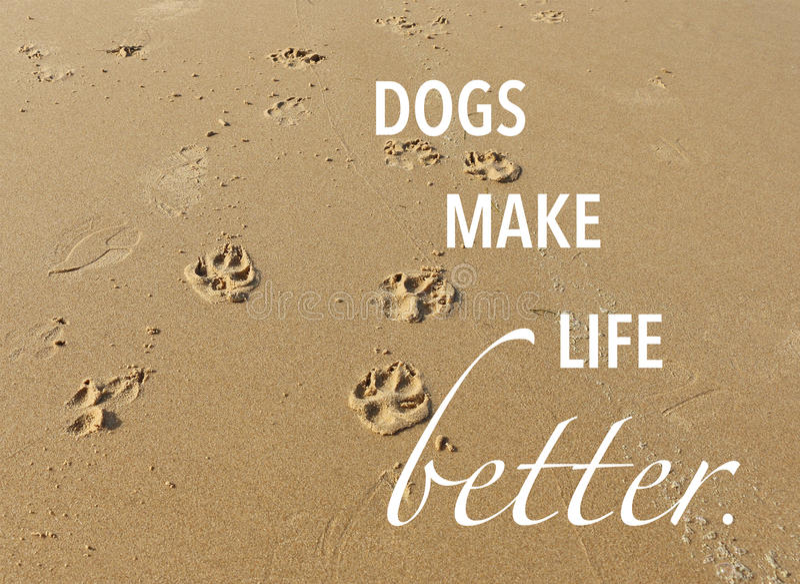 Τυπωμένες ύλες ποδιών σκυλιών στην άμμο στην παραλία με το απόσπασμα στοκ εικόνες με δικαίωμα ελεύθερης χρήσης