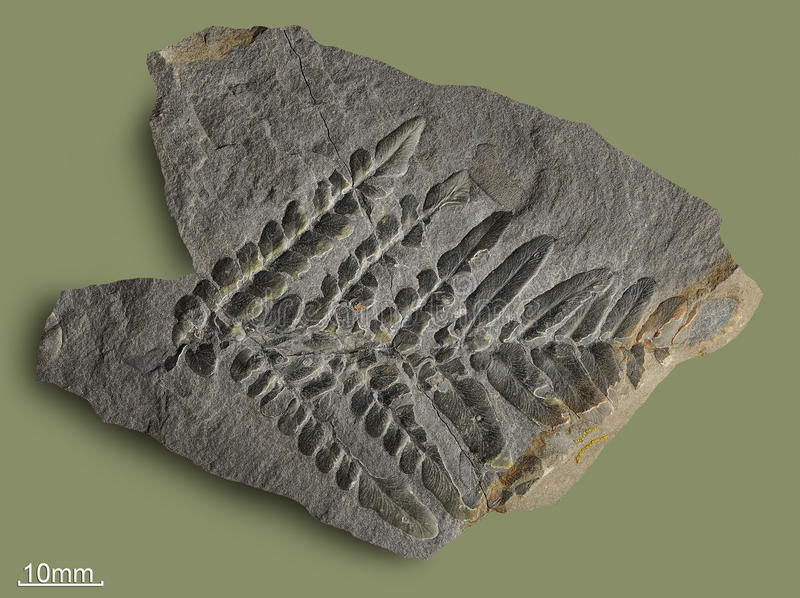 Τυπωμένες ύλες των αρχαίων εγκαταστάσεων στοκ εικόνες