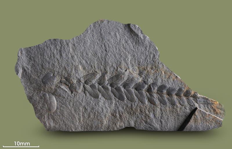 Τυπωμένες ύλες των αρχαίων εγκαταστάσεων στοκ φωτογραφίες με δικαίωμα ελεύθερης χρήσης