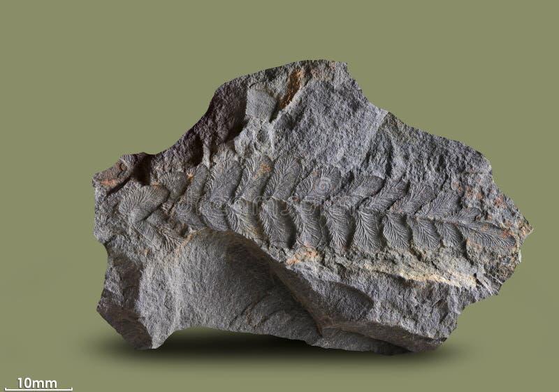 Τυπωμένες ύλες των αρχαίων εγκαταστάσεων στοκ εικόνα με δικαίωμα ελεύθερης χρήσης