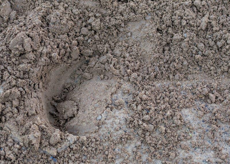 Τυπωμένη ύλη αλόγων στο ρύπο στοκ εικόνα