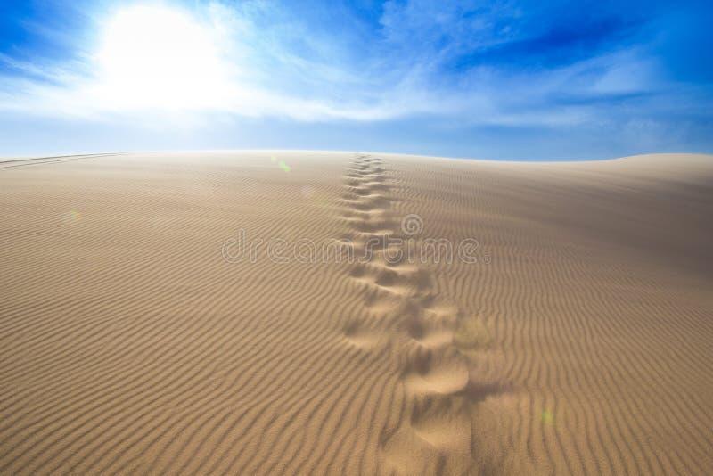 Τυπωμένη ύλη ποδιών στον αμμόλοφο άμμου στοκ εικόνα με δικαίωμα ελεύθερης χρήσης
